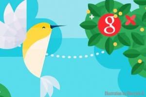 Kolibri Google és a keresőoptmalizálás
