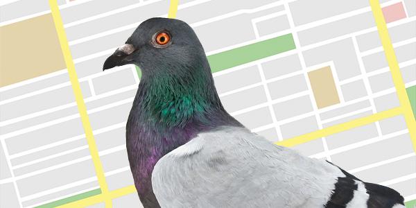 Google Pigeon - Galamb algoritmus