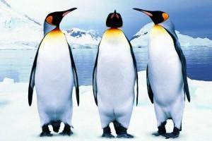 Google Pingvin 3