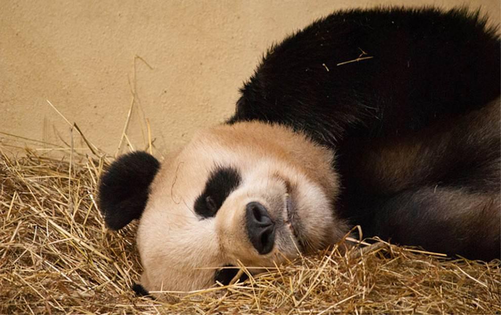 Google Panda 4.2 algoritmus