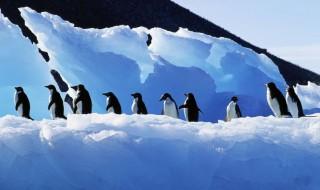 Google Pingvin algoritmus 3