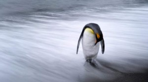 utolso-pingvin