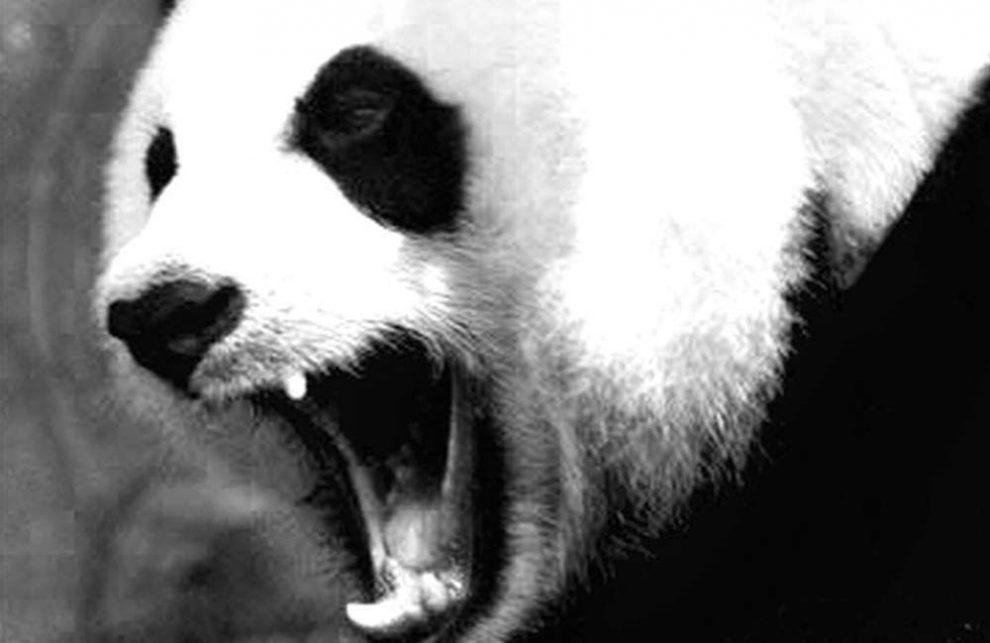 merges-panda